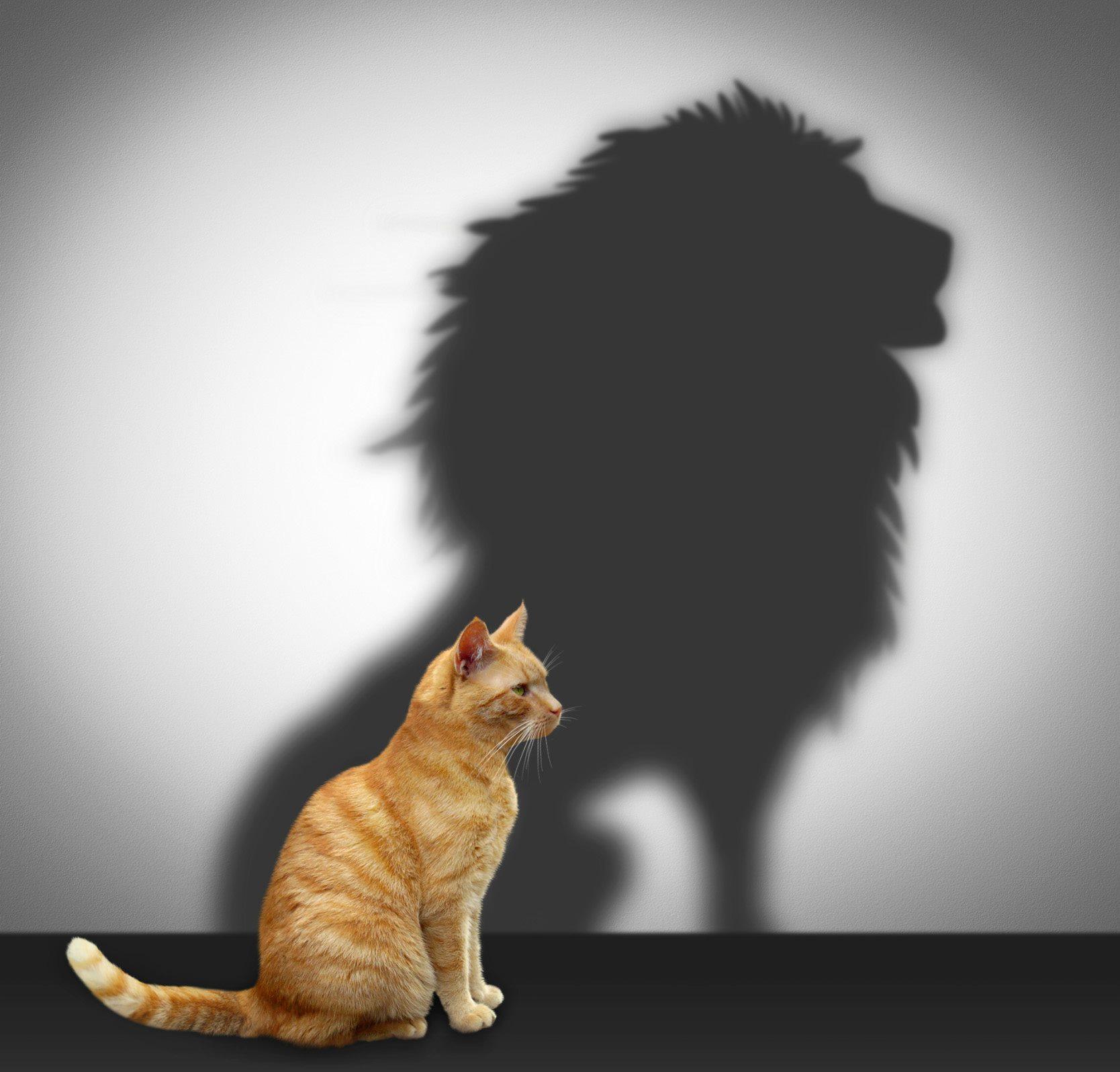 Kissa Leijona